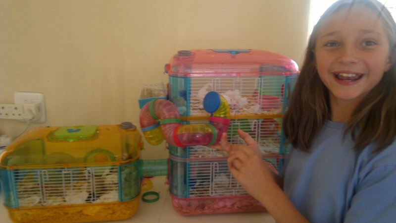 hamster The Best Hamster Cage Ever